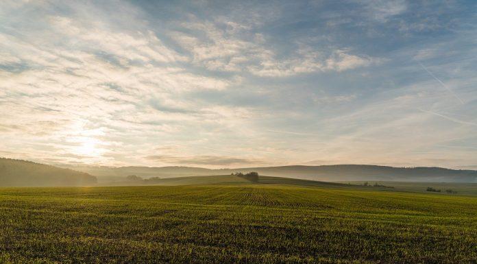 פסק דין: רוקח יפצה חקלאי על כך שהאשים אותו שהריסוסים שהוא מבצע בשדות גורמים למחלות